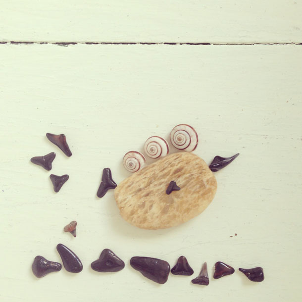beach finds: funny fish  |  snails, shark teeth, pebble