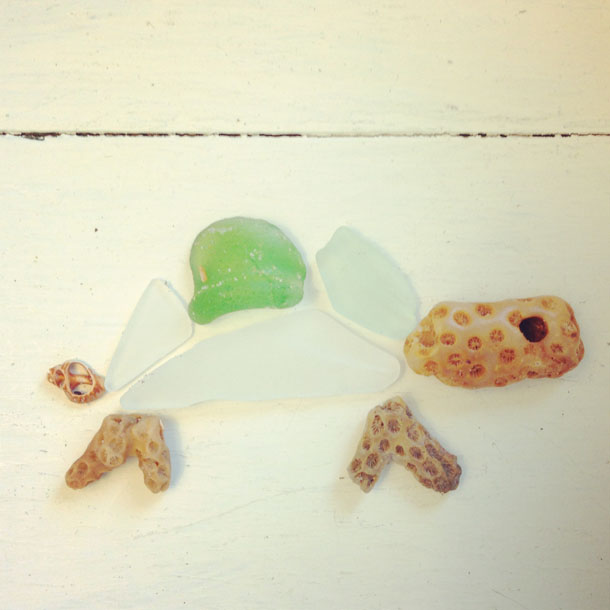 beach finds: turtle  |  coral, sea glass