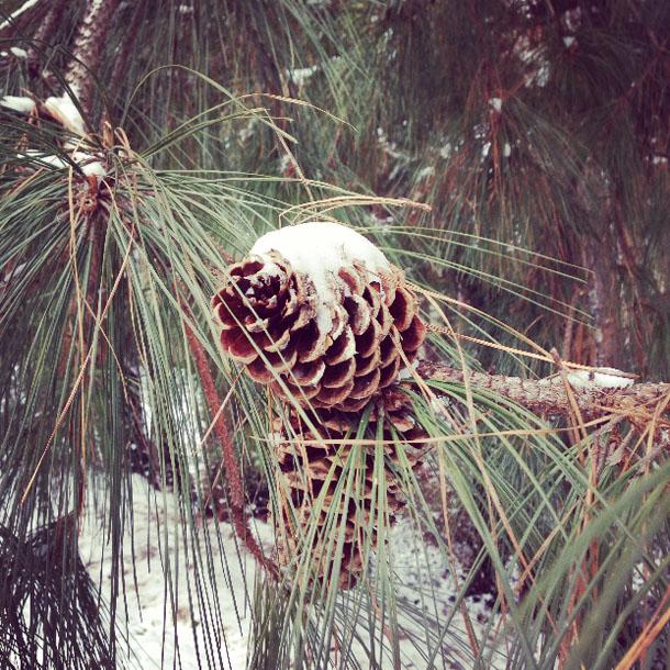 snow day: cone