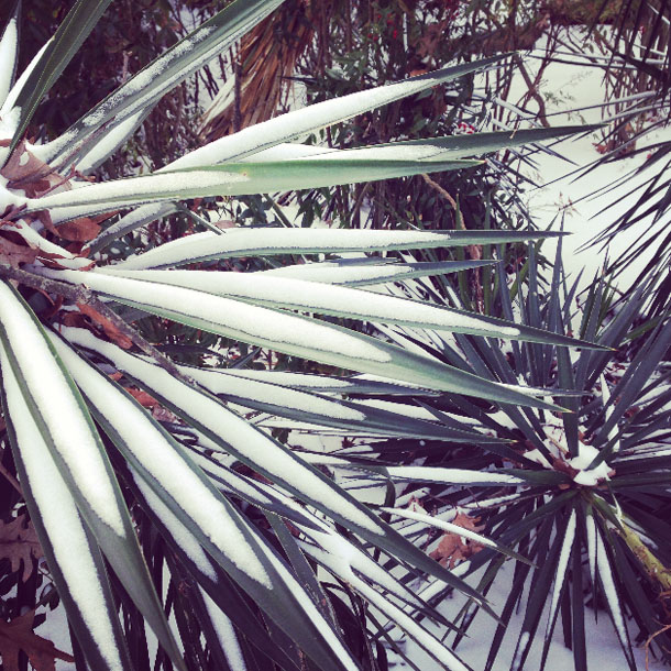 snow day: palm