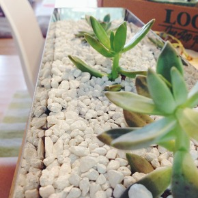 Plant Bebes