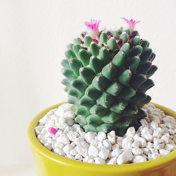 the prettiest cactus